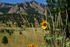 August in the Boulder Foothills
