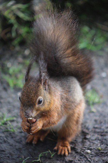 Nuts!, Canon EOS 5D MARK III, Canon EF 75-300mm f/4-5.6 USM