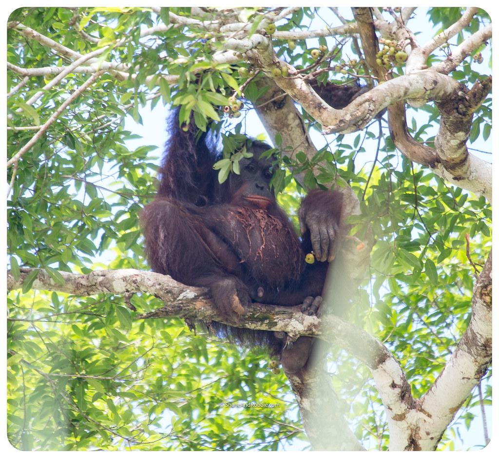 Borneo-20170411-_MG_7578