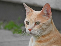 Nachbars Katze :-)
