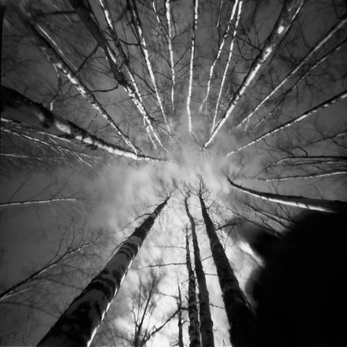 pinhole pinholetree birches f160 realitysosubtle rss6x6f