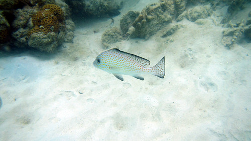 Koh Samui Chaweng Beach North Snorkel サムイ島