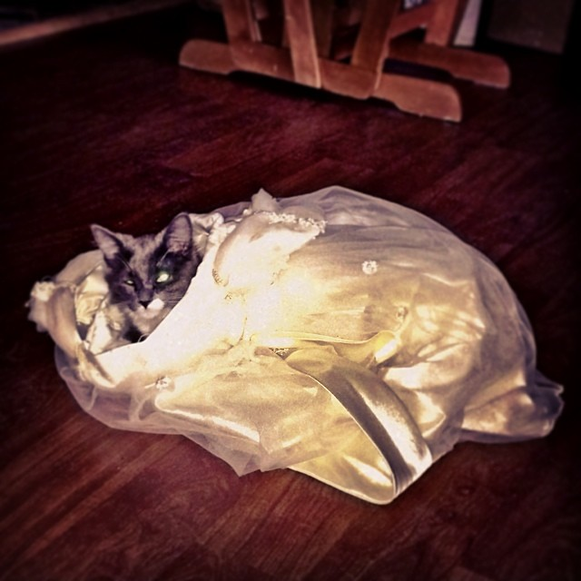 Kids princess dress... Or cat hideout? I guess that depends on who gets there first!
