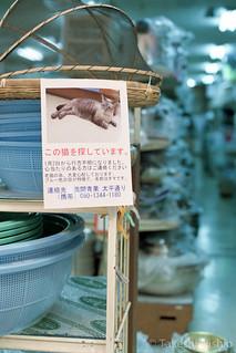 この猫を探しています / searching this cat