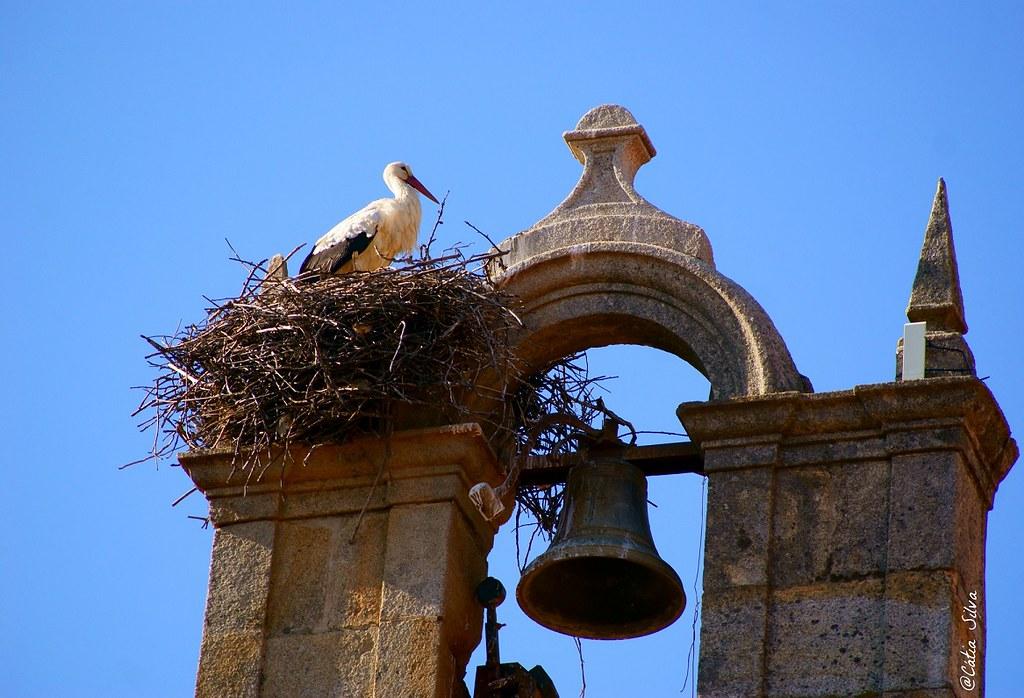 Extremadura_Valle del Jerte_ El torno (2)
