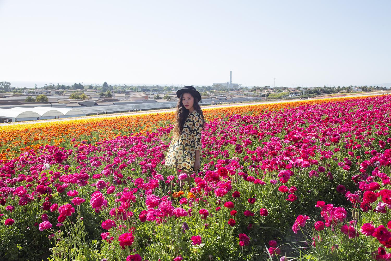 flowerfields2 resize
