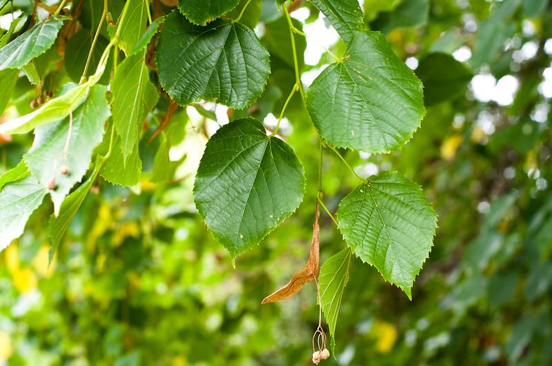 Foliage-5