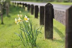 Spring Fence - HFF