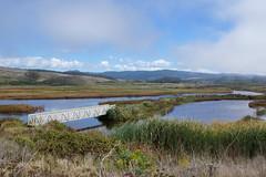 2013-09-15 09-22 Kalifornien 120 Pescadero Marsh Natural Preserve