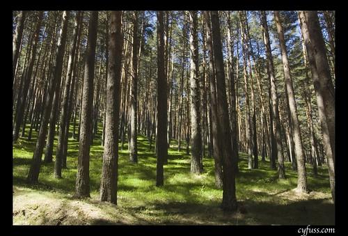 Bosque en Navafría