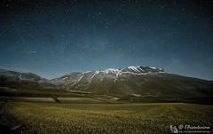 Fioritura al Pian Grande by night (Parco Nazionale dei Monti Sibillini)