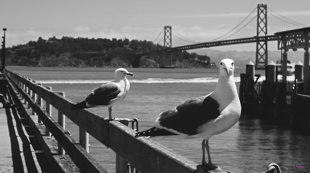 City by the Bay - in Black & White