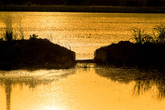 20140512_rice sunset 0722_online copy