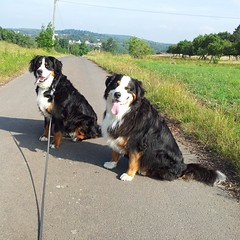 My gorgeous girls on our morning walk