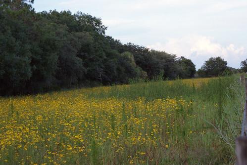 floridanativewildflower