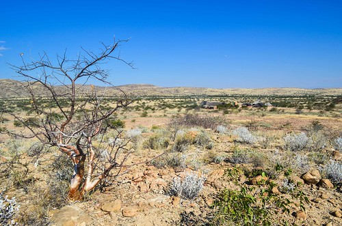 Forêt pétrifiée, Namibie