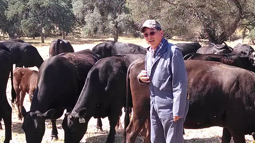 Not even a three year drought weakens Glenn Nakagawa's resolve or determination to maintain his herd and protect the unique genetics of his American Wagyu cattle.