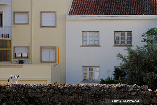 60 - Castelo Branco Portugal - Каштелу Бранку Португалия