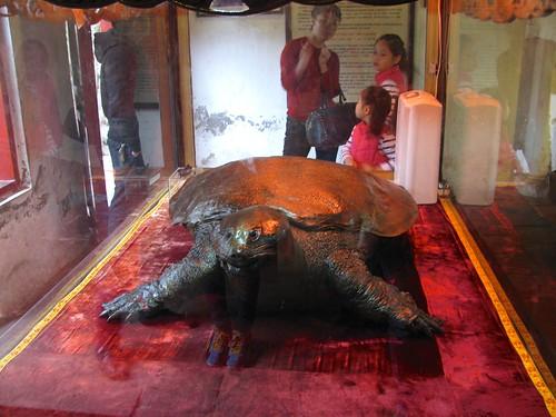 Tortuga embalsamada en templo de Ngoc Son
