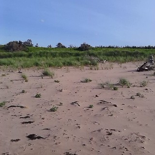 Looking towards the dunes, Stanhope #princeedwardisland #pei #princeedwardislandnationalpark #peinationalpark #stanhope #beaches #dunes