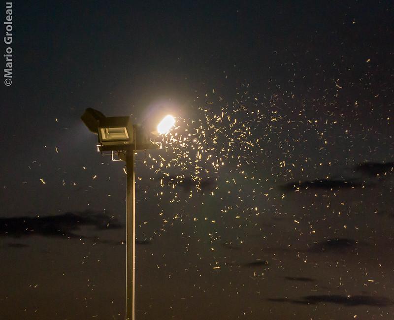 La lumière blanche attire les insectes nocturnes!