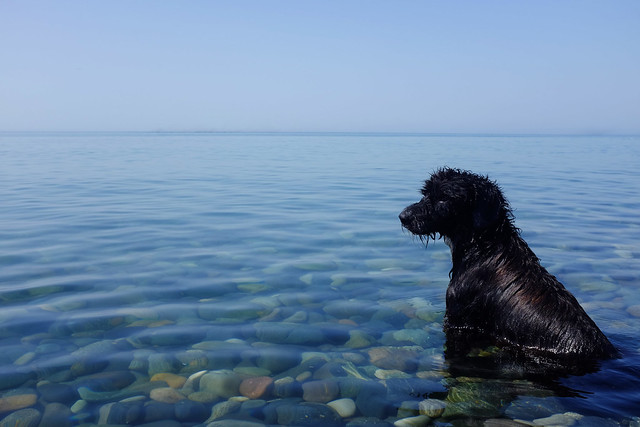 Stray Black Dog in the Black Sea, Batumi, Georgia