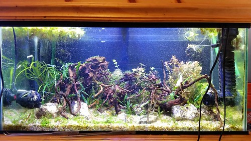 50G Aquascape