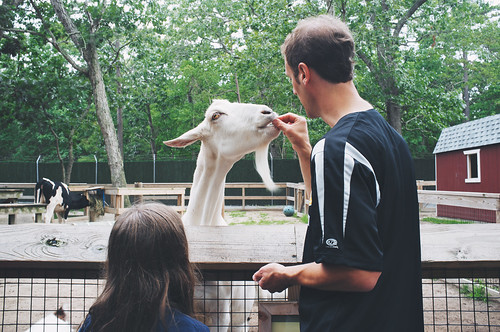No trip to the Cape May Zoo is completed without feeding the goats.