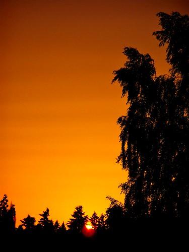 sunset summer sun weather sunsetsky sunsetcolors beautifulevening summersunset silhouetteoftrees shadesoforange lastofthesettingsun summertimesunset vancouverwasunset sunsetinvancouverwa