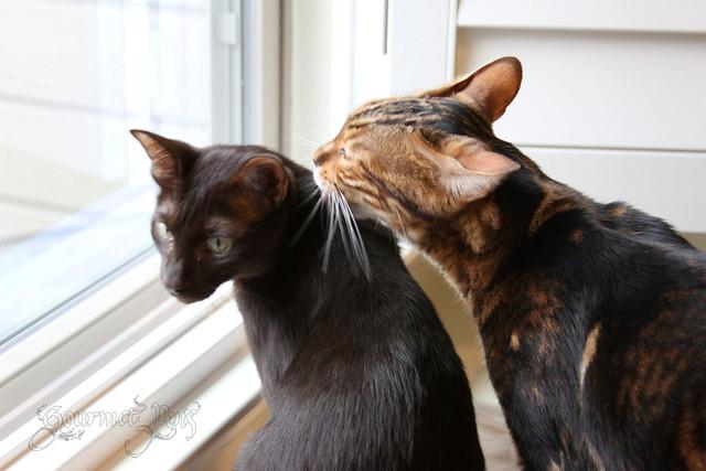 Koa & Ellie
