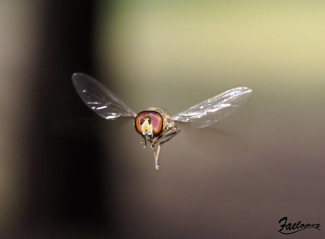 Fly, fly