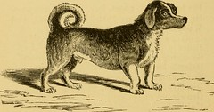 "Image from page 261 of ""Breeding, training, management, diseases & c. of dogs:"" (1877)"