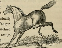 """Image from page 213 of """"The horse and other live stock"""" (1866)"""