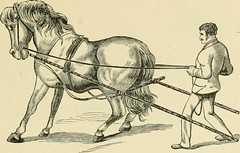 """Image from page 144 of """"The standard horse book, comprising the taming, controlling and education of unbroken and vicious horses"""" (1895)"""