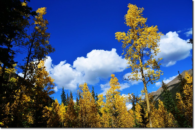 Guanella Pass in Fall, Colorado 4