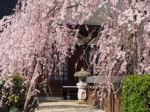 Jiunji-temple/慈雲寺