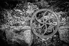 Junk in the forest