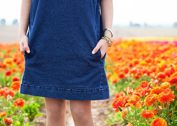 בלוג אופנה, שמלת ג'ינס, נוריות, fashionpea, denim dress, ranunculus, קטיף נוריות קדמה