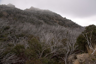 Bright and Mount Buffalo