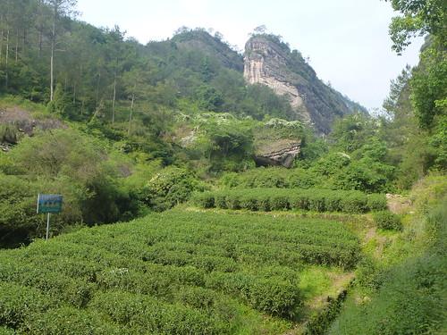 Fujian-Wuyi-Shuillandong-Dahongpao (2)