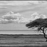 Namibia black & white
