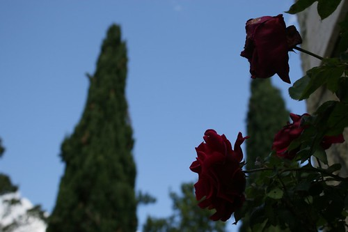 Alcuni dei tanti fiori del paese