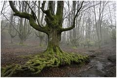 el bosque de los abrazos