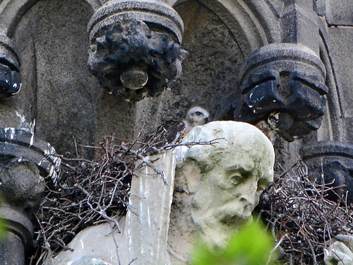 Cathedral Hawk Nest (9966)
