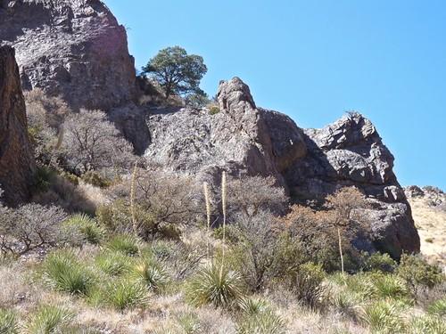 Soledad Canyon, Organ Mountains, NM