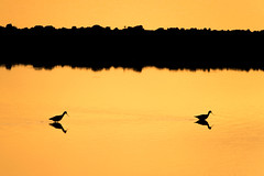 20140512_rice sunset 0426_online copy