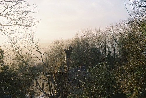 misty wild