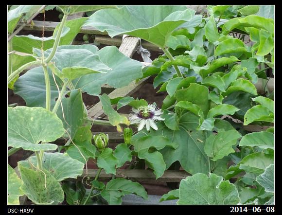 20140608_Flower