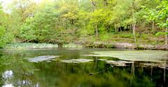 Pond, Woods in Bingley
