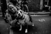 Happy Girl with her Dog..  Brick Lane London